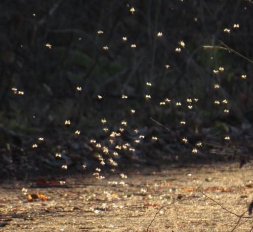 Mücken-01