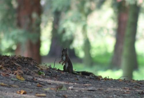 Eichhörnchen001
