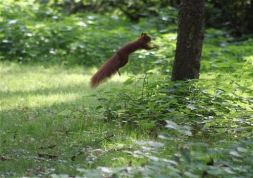 Eichhörnchen005