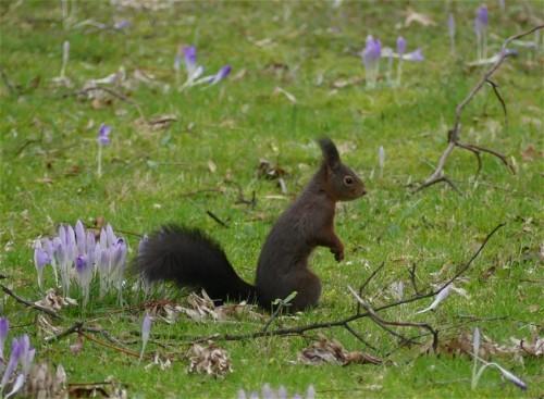 Eichhörnchen006
