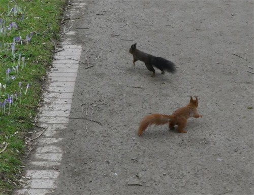 Eichhörnchen007