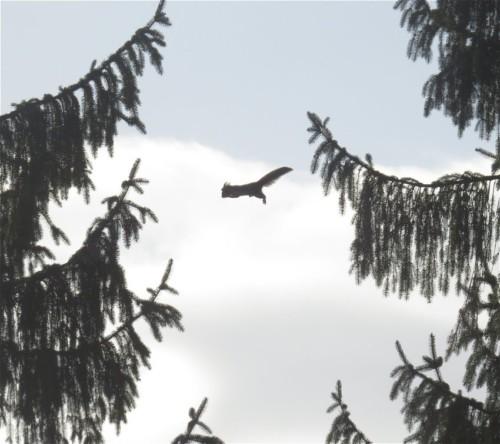 Eichhörnchen010