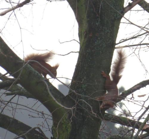 Eichhörnchen022
