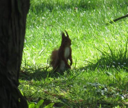 Eichhörnchen023