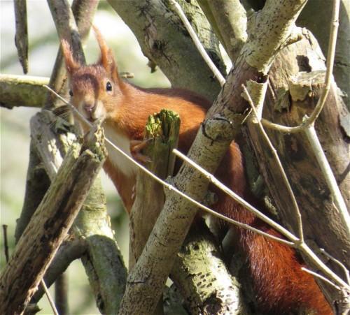 Eichhörnchen026