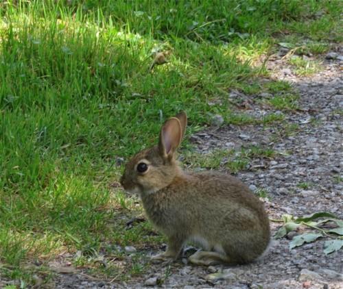 Kaninchen001