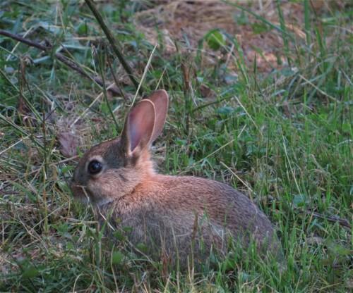 Kaninchen002
