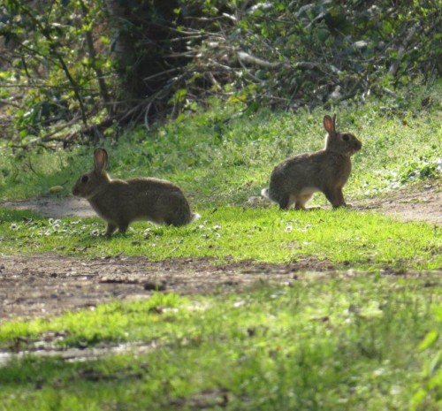 Kaninchen004