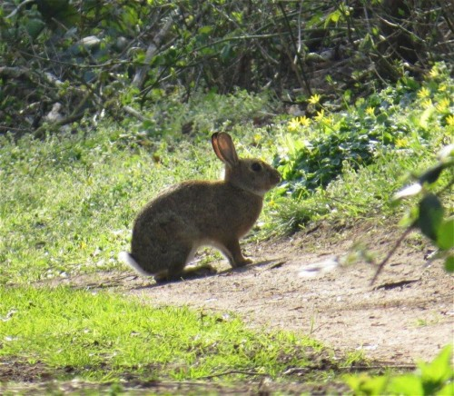 Kaninchen005