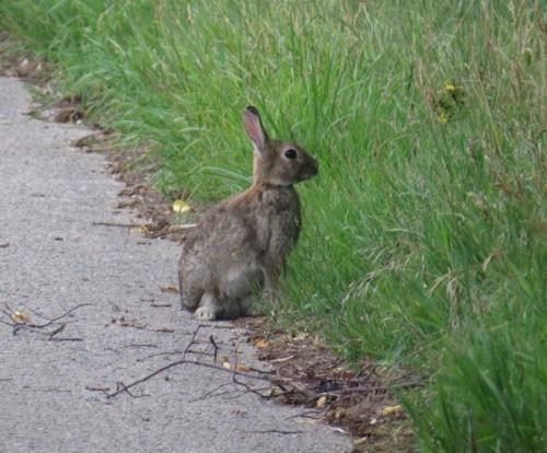 Kaninchen008