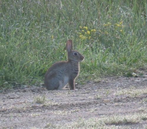 Kaninchen010 (1)