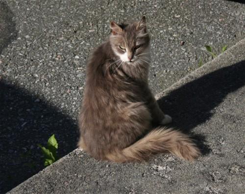 Katze002