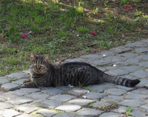 Katze004