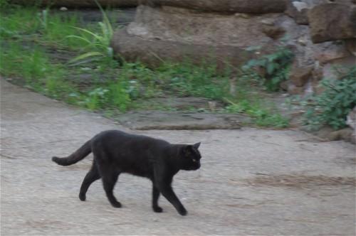 Katze008