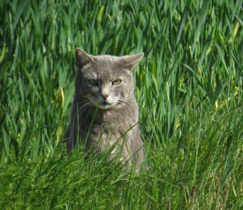 Katze012