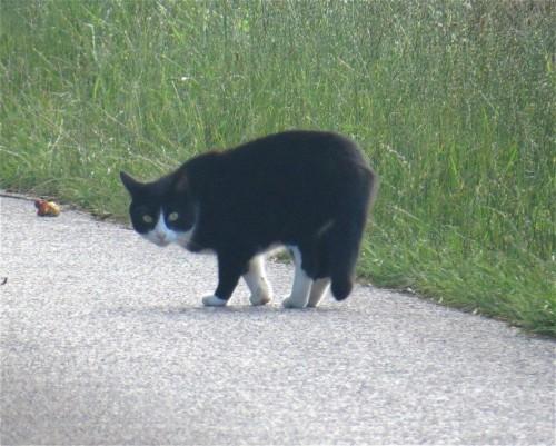 Katze013