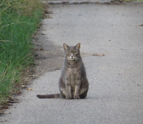 Katze014