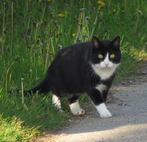 Katze017