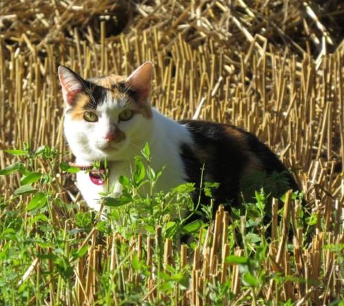 Katze018