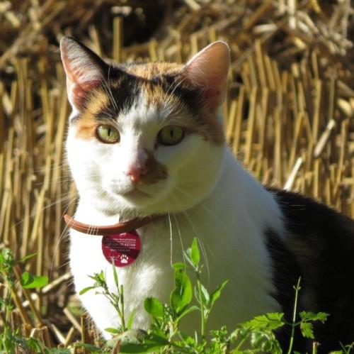 Katze019
