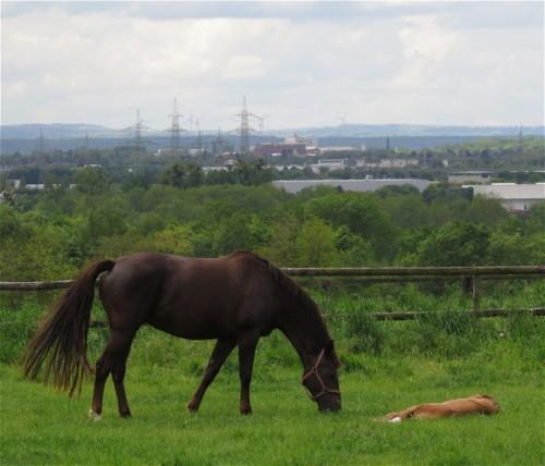 Pferd-Unbekannt002
