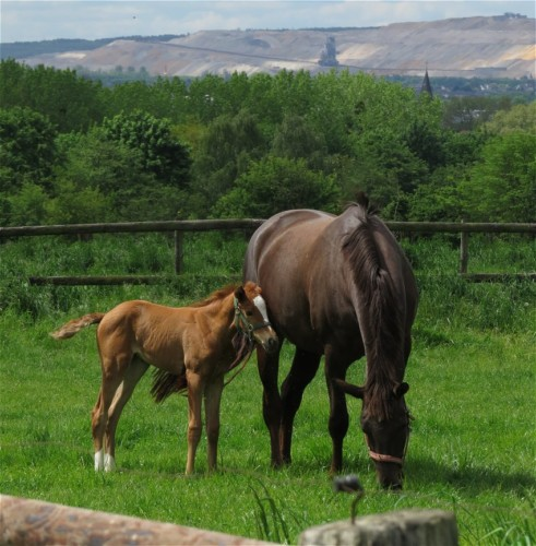 Pferd-Unbekannt004