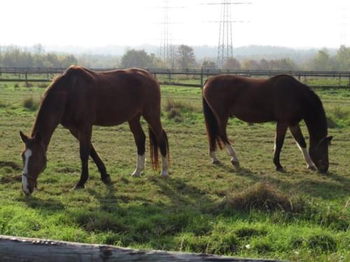 Pferd-Unbekannt006