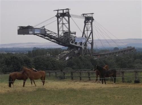 Pferd-Unbekannt009