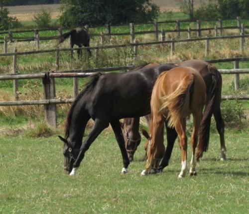 Pferd-Unbekannt011