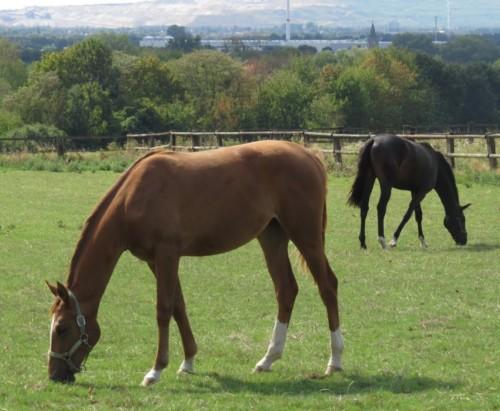 Pferd-Unbekannt014