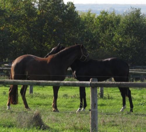 Pferd-Unbekannt016