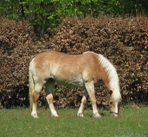 Pferd-Unbekannt017