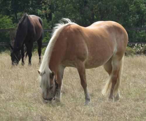 Pferd-Unbekannt018