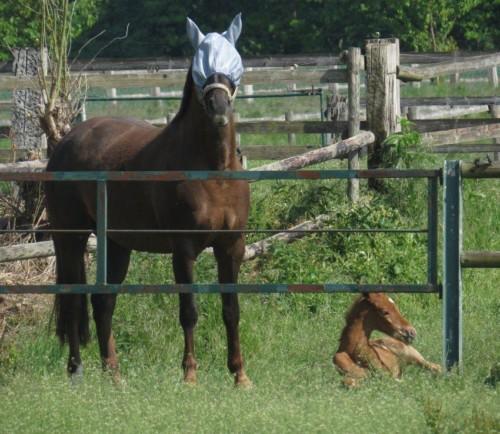 Pferd-Unbekannt019