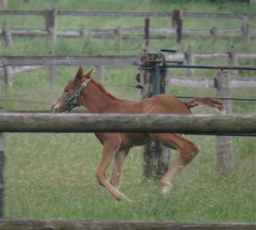 Pferd-Unbekannt020
