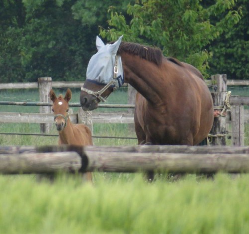Pferd-Unbekannt021