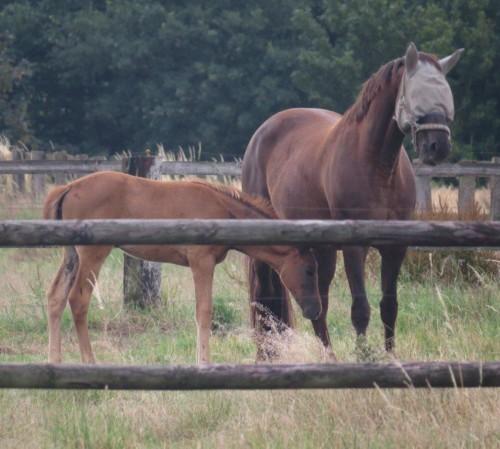 Pferd-Unbekannt022 (1)