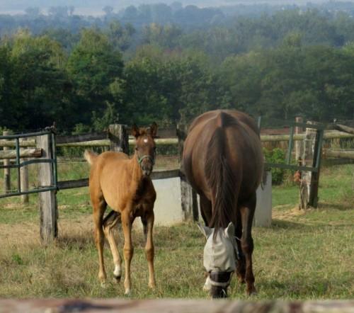 Pferd-Unbekannt023