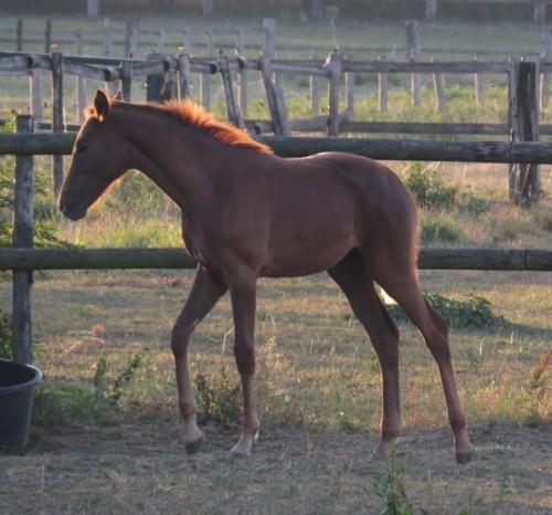 Pferd-Unbekannt028