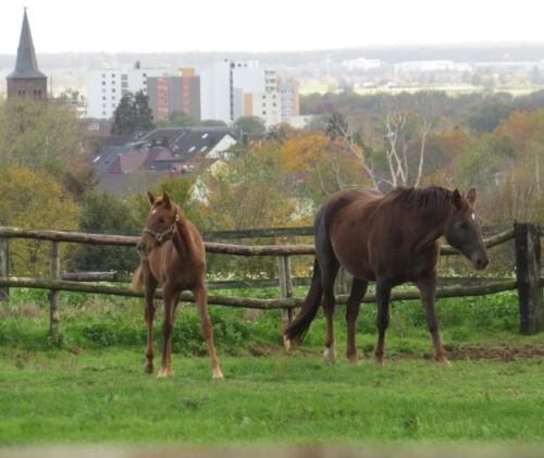 Pferd-Unbekannt029