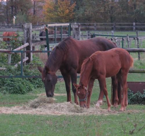 Pferd-Unbekannt031