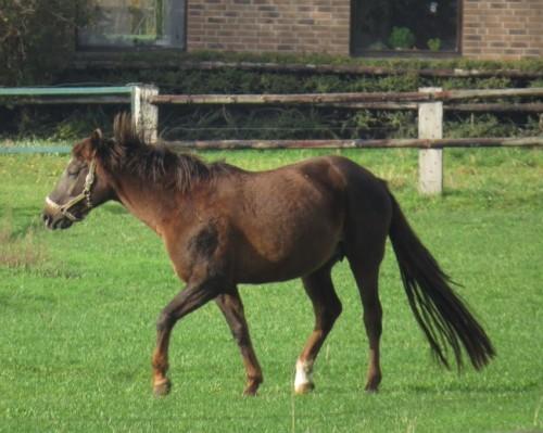 Pferd-Unbekannt033
