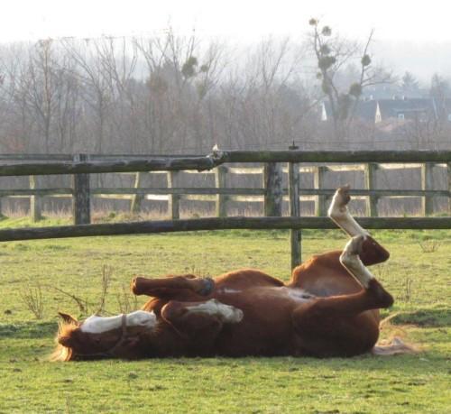 Pferd-Unbekannt036