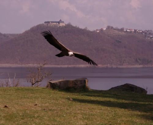 SchlossWaldeck013-2014