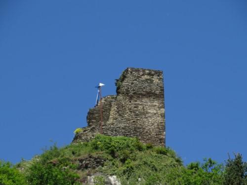 RuineStahlenberg002-2018