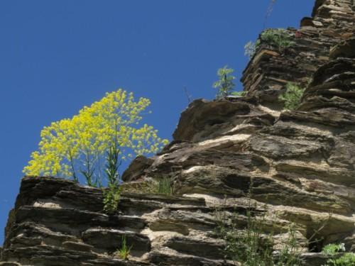 RuineStahlenberg016-2018