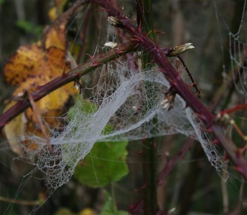 Spiderweb001