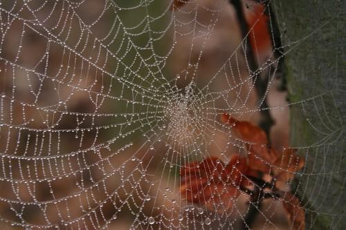 Spiderweb004