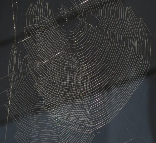 Spiderweb008
