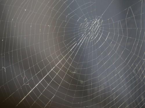 Spiderweb012